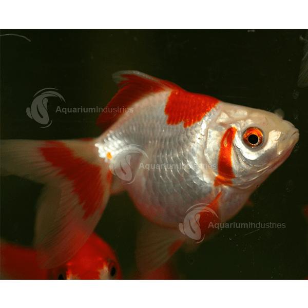 Ryukin Goldfish Aquarium Industries