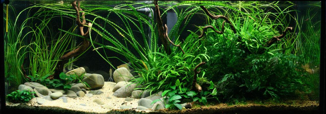 Aquarium Industries - Care Sheets for Tissue Culture Plants