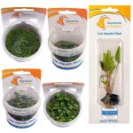Plant_NEW