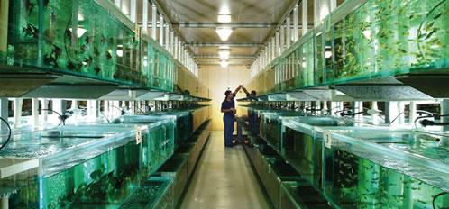 wholesale aquarium fish